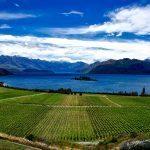 Studera i Nya Zeeland i Nelson Marlborough på blueberry.nu
