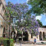 Studera i Brisbane på University of Queensland på blueberry.nu