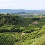 Studera gastronomi i Piemonte i Italien på blueberry.nu