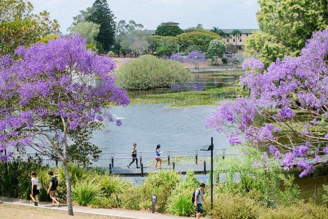 University of Queensland Jacaranda på blueberry.nu