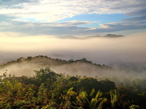 Studera på Swinburne University Borneo på blueberry.nu