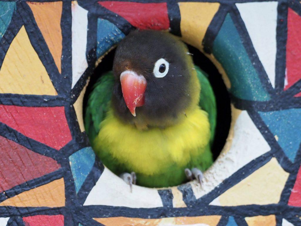 Studera på university of Auckland och besök Auckland Zoo, studera utomlands i New Zealand