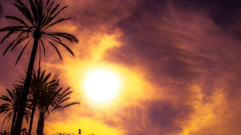 Studera utomlands i USA, studera i Kalifornien, CSU Long Beach, California State University Long Beach