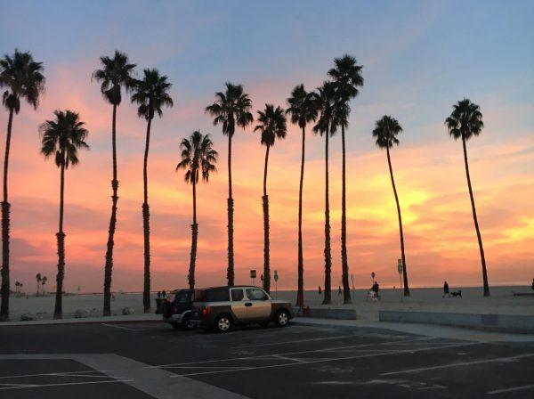 Palmer och solnedgång