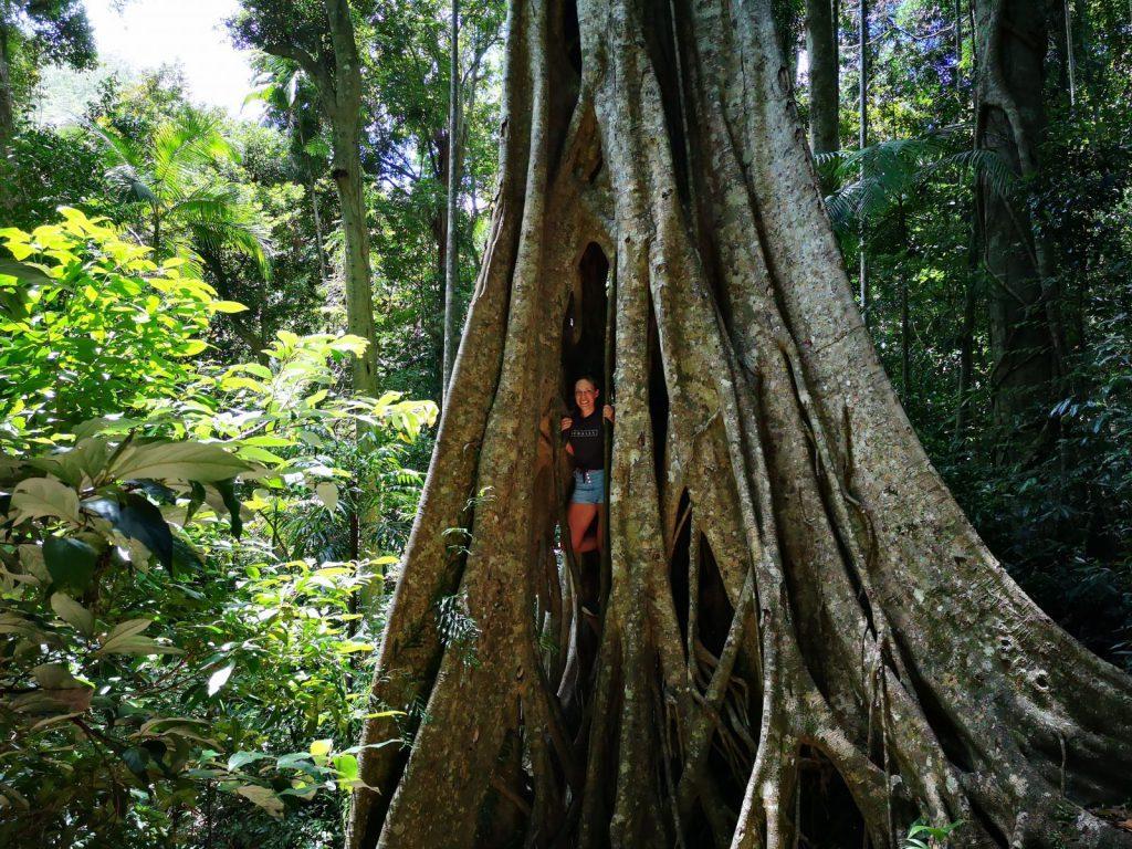 Utlandsstudier i Queensland, Blueberry studenten Jenny studerar till PT på TAFE.