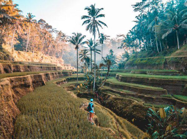 Risfält i Bali