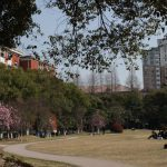 Shanghai University campus