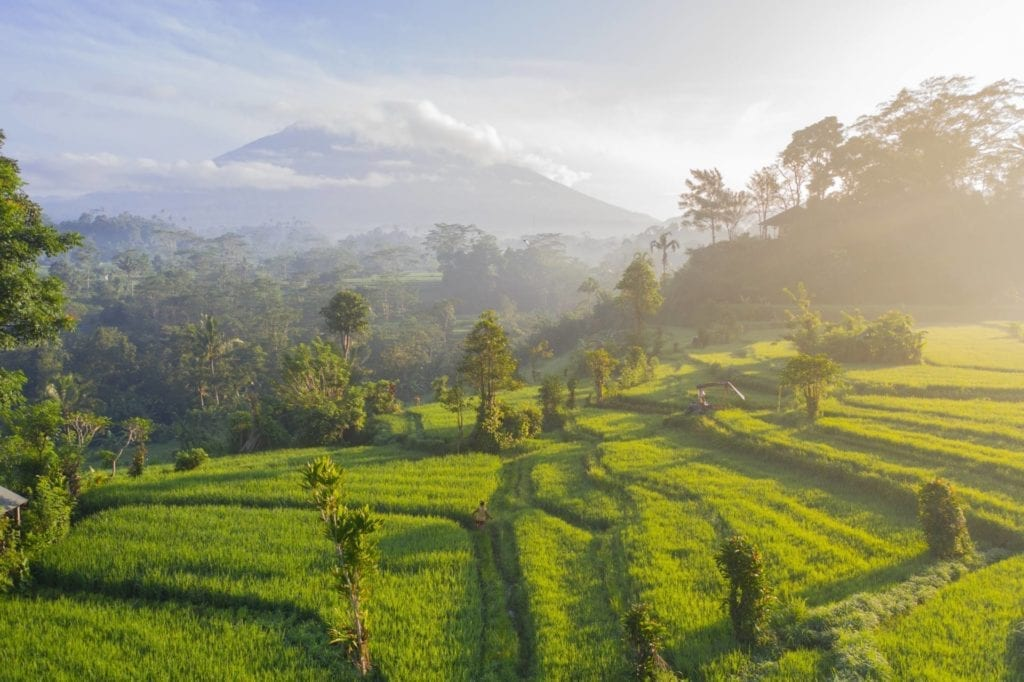 Risfält Bali